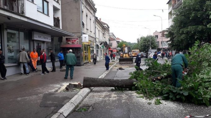 Seča stabala u Aleksincu: Za opštinu opravdano, ali ne i za građane 2