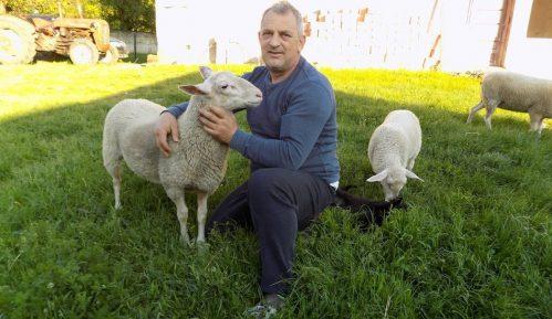 """Ovčarstvo: """"Sajber pastir"""" Milorad živi u Austriji, a u selu Dobrnje uzgaja posebnu vrstu ovaca 3"""