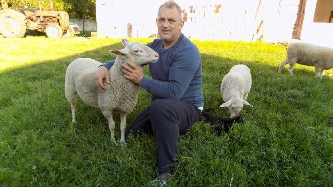 """Ovčarstvo: """"Sajber pastir"""" Milorad živi u Austriji, a u selu Dobrnje uzgaja posebnu vrstu ovaca 2"""