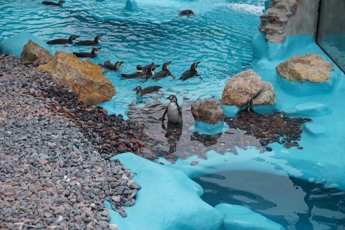Pingvini u Beogradu: Zoološki vrt primio nove stanovnike 4