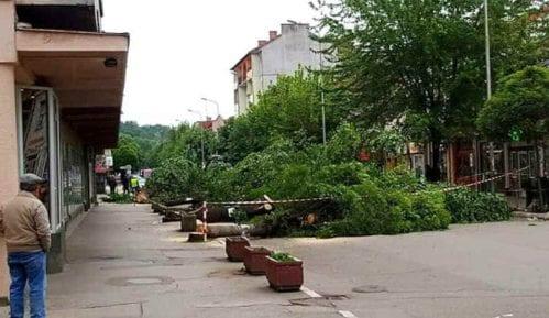 Krivična prijava zbog seče drvoreda u Aleksincu 9