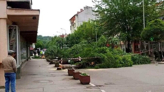Krivična prijava zbog seče drvoreda u Aleksincu 1