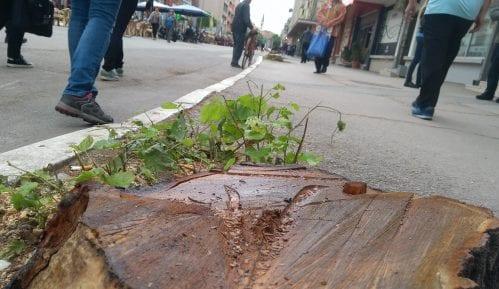 Koalicija za decentralizaciju: Brutalni napad na aktivistu protiv seče drveća u Aleksincu 2