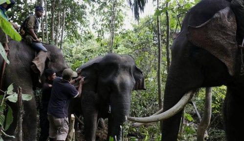 Najmanje 55 slonova umrlo od gladi u Zimbabveu za dva meseca 7