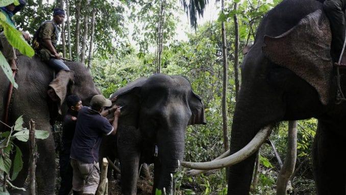 Najmanje 55 slonova umrlo od gladi u Zimbabveu za dva meseca 3