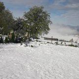 Majski sneg uništio maline u Moravičkom i Zlatiborskom okrugu, ima ga i u višim delovima Ivanjice 10
