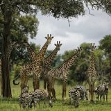 UN: Milion ugroženih vrsta na planeti, opstanak ljudi u pitanju 9