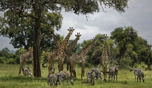 UN: Milion ugroženih vrsta na planeti, opstanak ljudi u pitanju 6