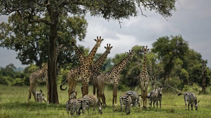 UN: Milion ugroženih vrsta na planeti, opstanak ljudi u pitanju 1