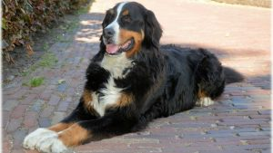 Kako da pomognete psu koji trpi jake bolove u leđima 3