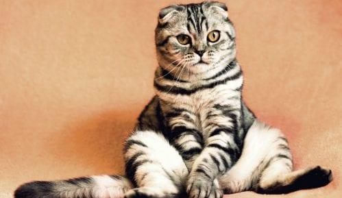 Šta treba da znate ako imate stariju mačku? 2