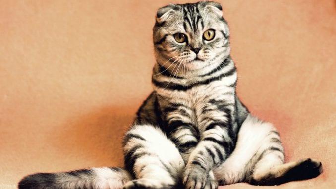 Šta treba da znate ako imate stariju mačku? 1