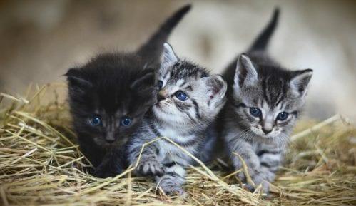 Veterinari preporučuju vlasnicima da mačke ne izlaze napolje zbog korona virusa 8