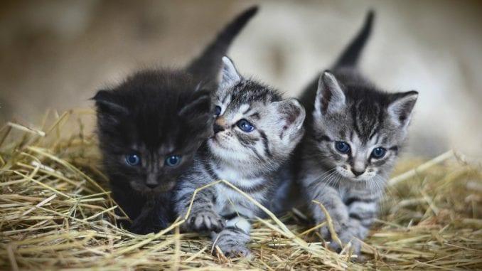 Zašto mačke jedu travu? 2