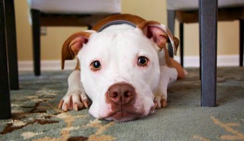 Razlozi zbog kojih vas pas uporno gleda 12
