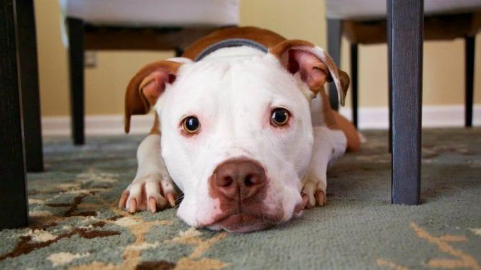 Razlozi zbog kojih vas pas uporno gleda 1