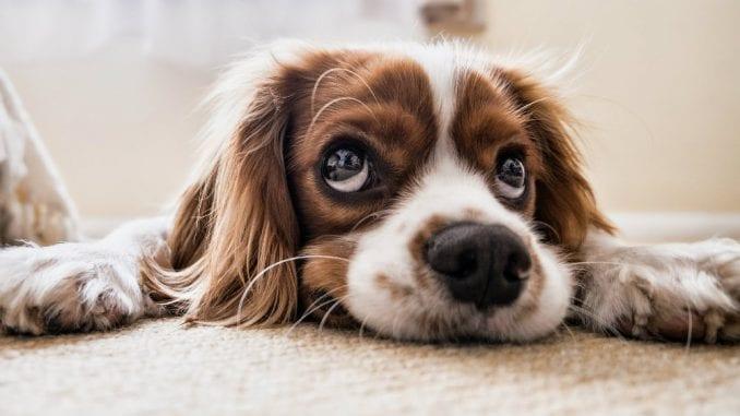 Šta su uzroci šištanja kod pasa? 4