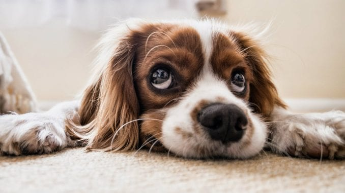 Šta su uzroci šištanja kod pasa? 3