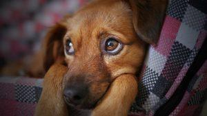 Razlozi zbog kojih vas pas uporno gleda 4