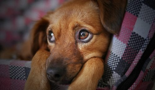 Više od 5.000 pasa i mačaka godišnje ugine zbog petardi 10