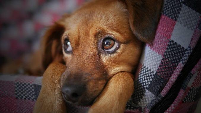 Više od 5.000 pasa i mačaka godišnje ugine zbog petardi 1