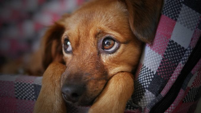 Više od 5.000 pasa i mačaka godišnje ugine zbog petardi 4