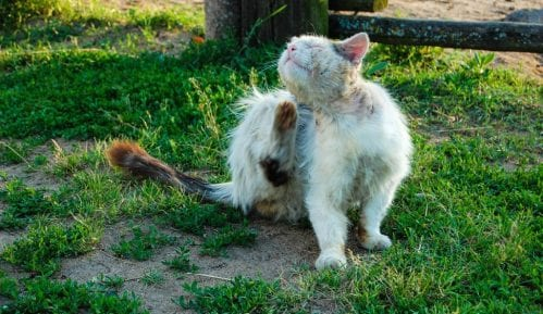 Šta raditi kad mačka dođe u kontakt sa preparatom protiv buva za pse? 9