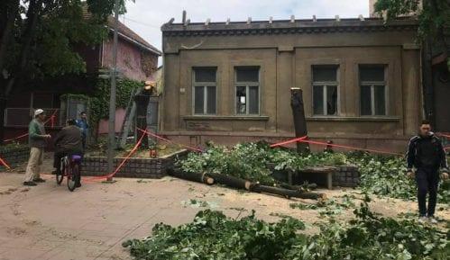 U Inđiji nezakonito posečena zdrava stabla lipe 14
