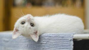 Hirurško uklanjanje kandži kod mačaka: Surovo ili opravdano? 3
