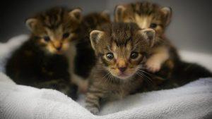 Hirurško uklanjanje kandži kod mačaka: Surovo ili opravdano? 5