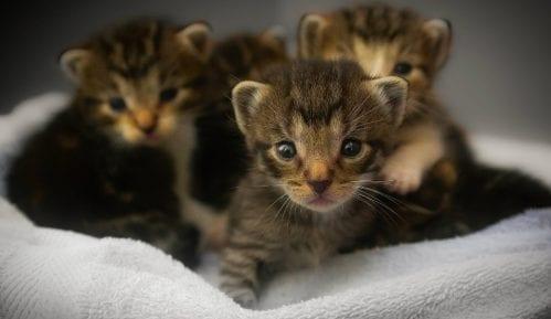 Zanimljive činjenice o tek rođenim mačićima 7