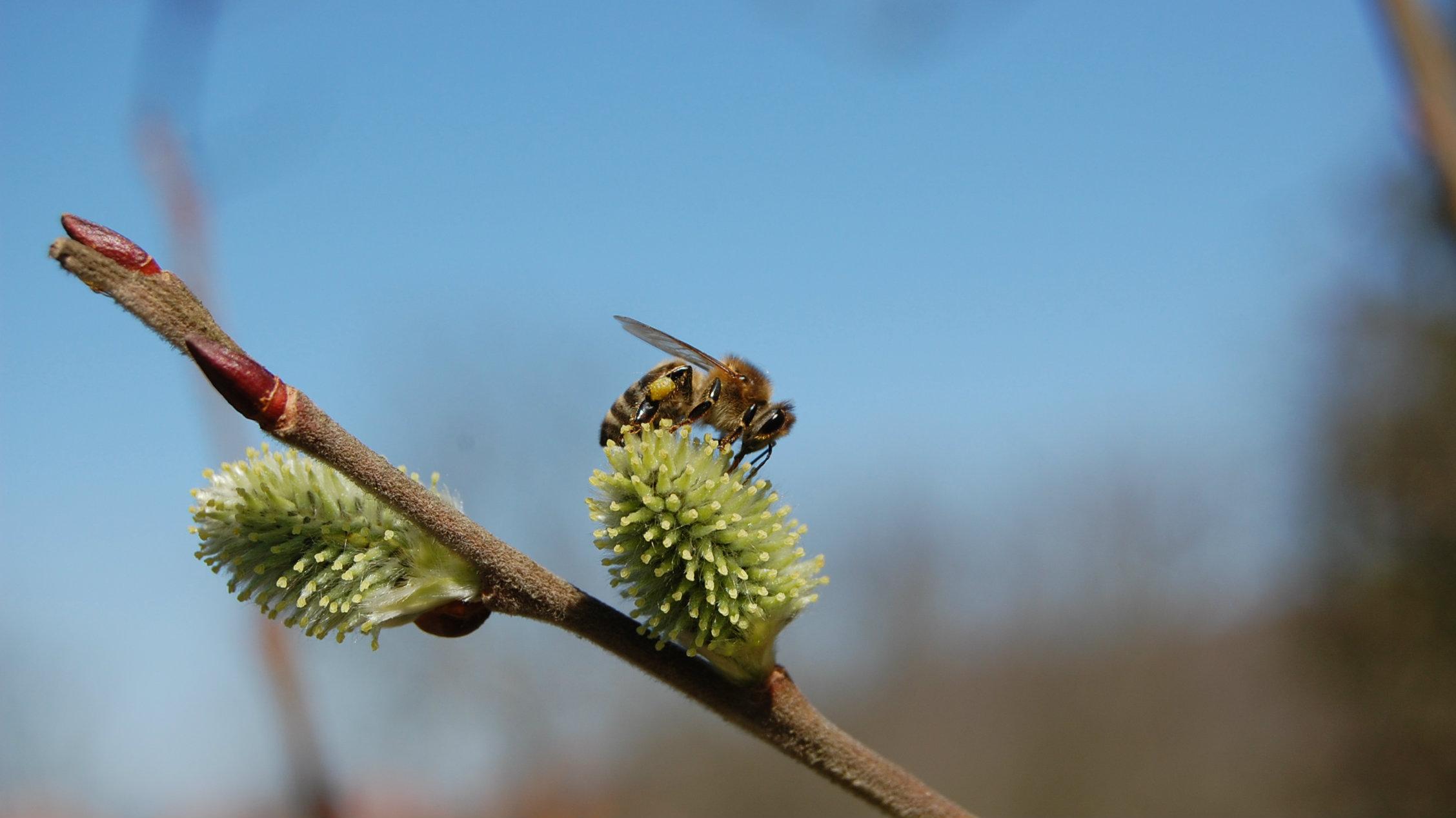 Kako izgleda biti pčela? 4