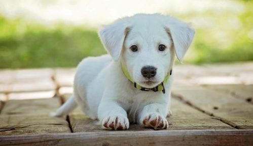 Koji psi su najbolji za decu? 1