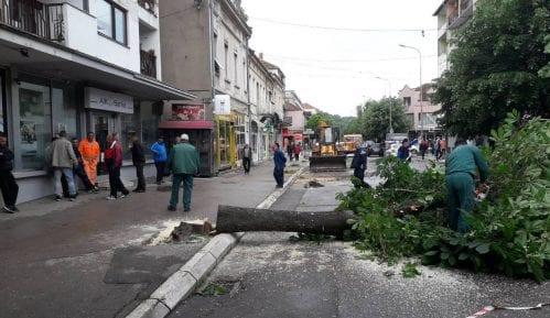 NVO: Seča drvoreda u Aleksincu izvršena bez odobrenja nadležnih organa 7