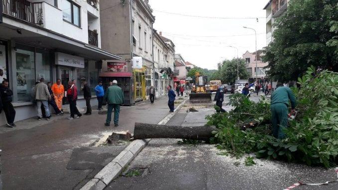 NVO: Seča drvoreda u Aleksincu izvršena bez odobrenja nadležnih organa 1