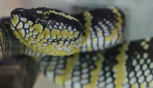 SZO rešava problem ujeda zmija 13