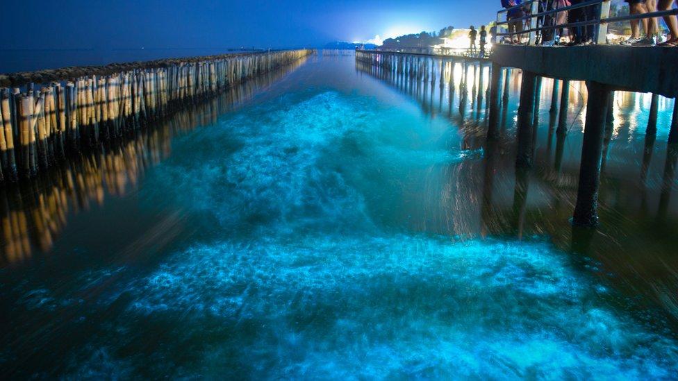 Bioluminiscentna morska stvorenja svetle, naročito kad su uznemirena