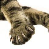 Zašto sve mačke u Americi imaju isečene nokte i da li je vreme da tome dođe kraj 13