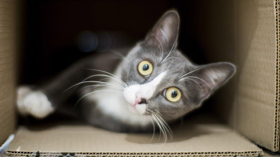 Kućne mačke obično žive duže - ali im je potrebno odgovarajuće okruženje