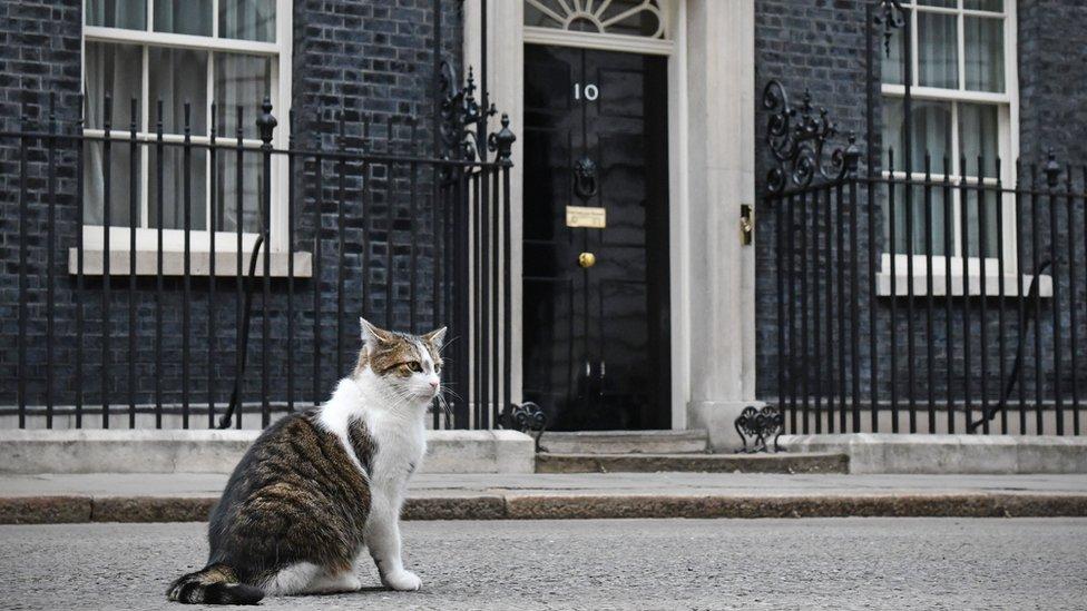 Mačka Lari živi ispred rezidencije britanskog premijera u Dauning ulici broj 10