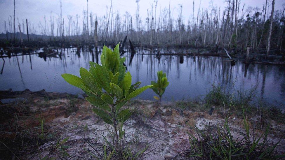 Krčenje šuma u Sumatri
