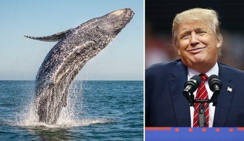 """Donald Tramp kaže da je upoznao """"Princa od kitova"""" i internet je oduševljen 4"""