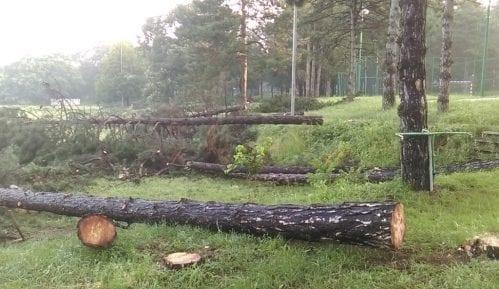 Zelena stranka osudila seču stabala u Košutnjaku, traži referendum o radovima u gradu 13