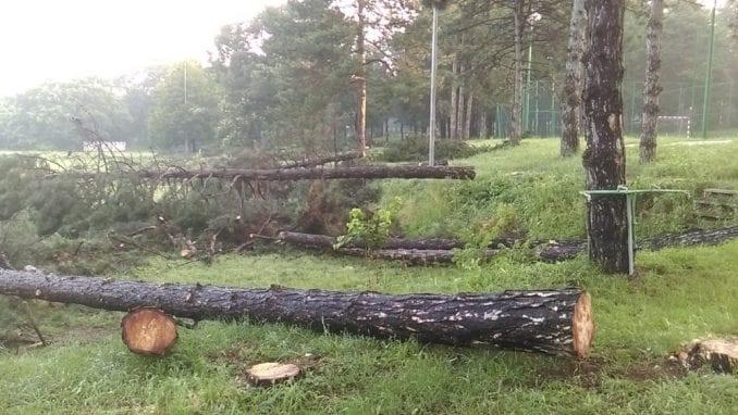Zelena stranka: Sprema se do sada neviđena seča stabala na Košutnjaku 1