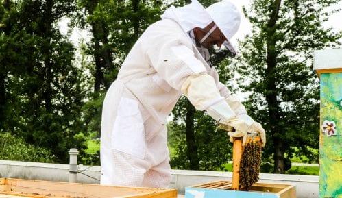 Crna Gora: Mladim pčelarima po pet košnica 9
