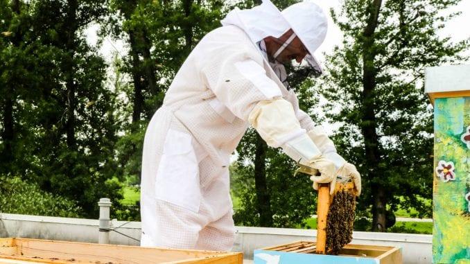 Čuvanjem pčela, čuvamo sebe 1