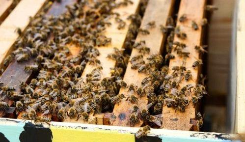 Pčelari i Uprava za zaštitu bilja pozvali ratare i voćare da ne ugrožavaju opstanak pčela 2