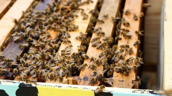 Pravovremena podrška crnogorskog Ministarstva pčelarima u kriznoj situaciji 4