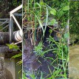 U Srbiji se prečišćava samo 16 odsto otpadnih voda ispuštenih u kanalizaciju 15