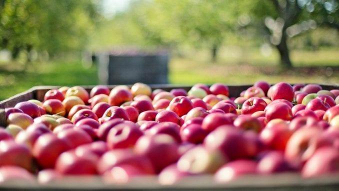 Koliko puta se prskaju jabuke u Srbiji? 1